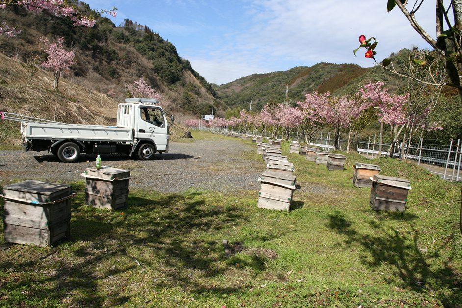 宮崎県綾町にある蜂場