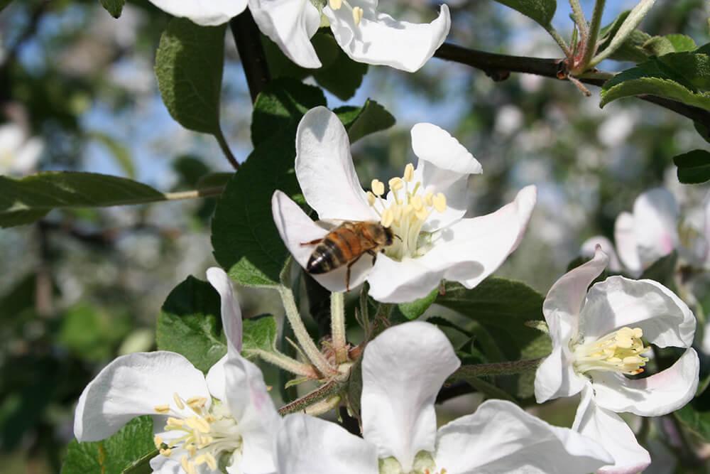 宮崎から連れてきたミツバチ