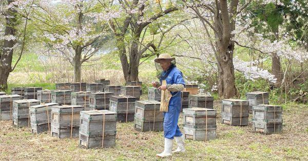 毎年恒例ミツバチ大移動!─青森編ー