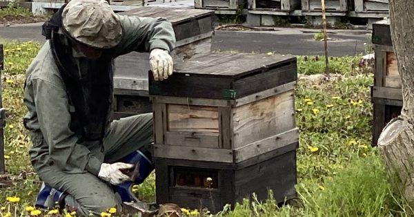 毎年恒例ミツバチ大移動!─青森編─ 第二弾