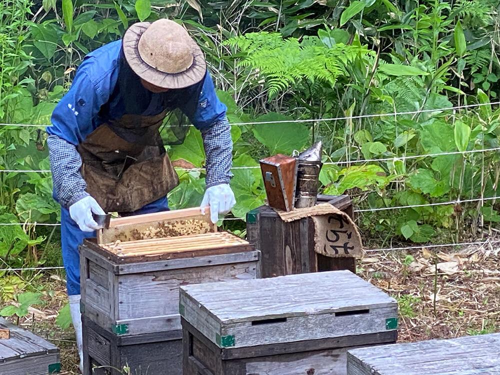 蜂の巣を引き上げる