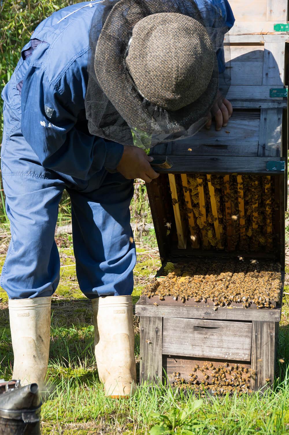 猛暑に耐えたミツバチたち