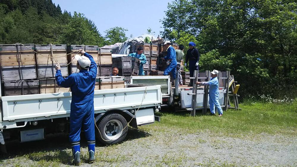 ミツバチたちが北海道へ出発